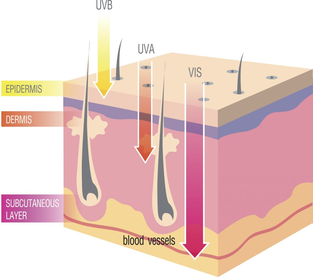 uv rays damage to the skin